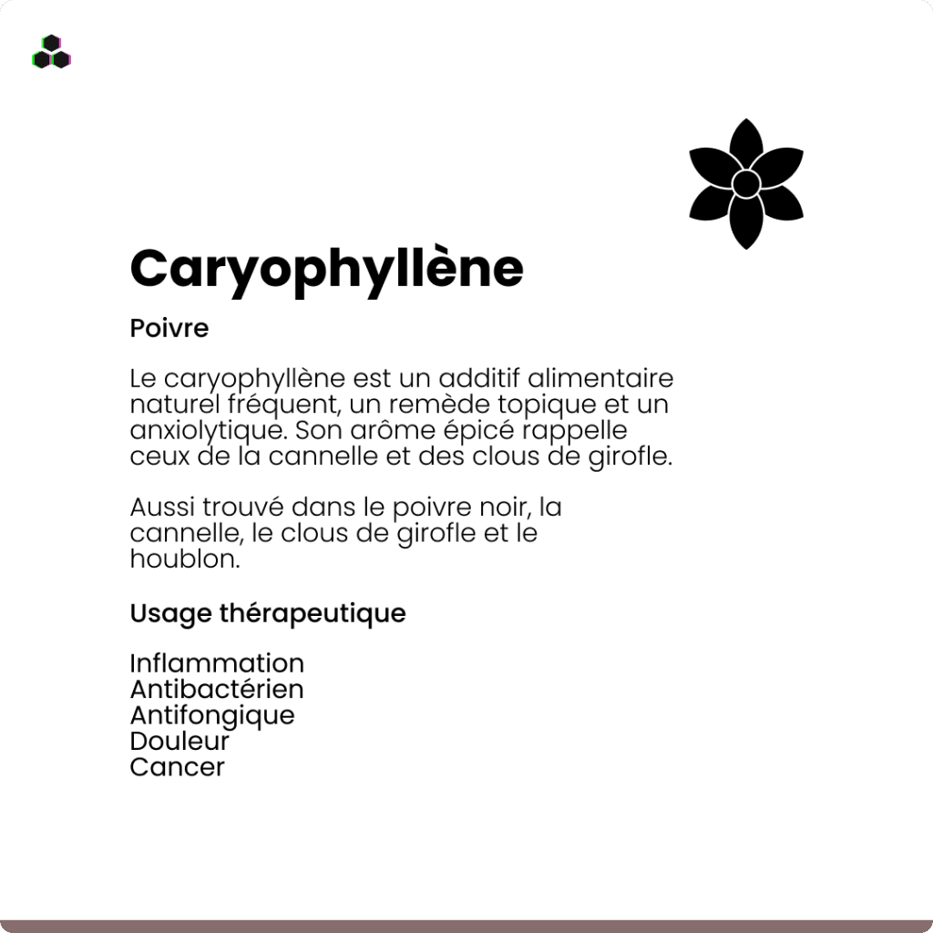Le terpène du cannabis Caryophyllène
