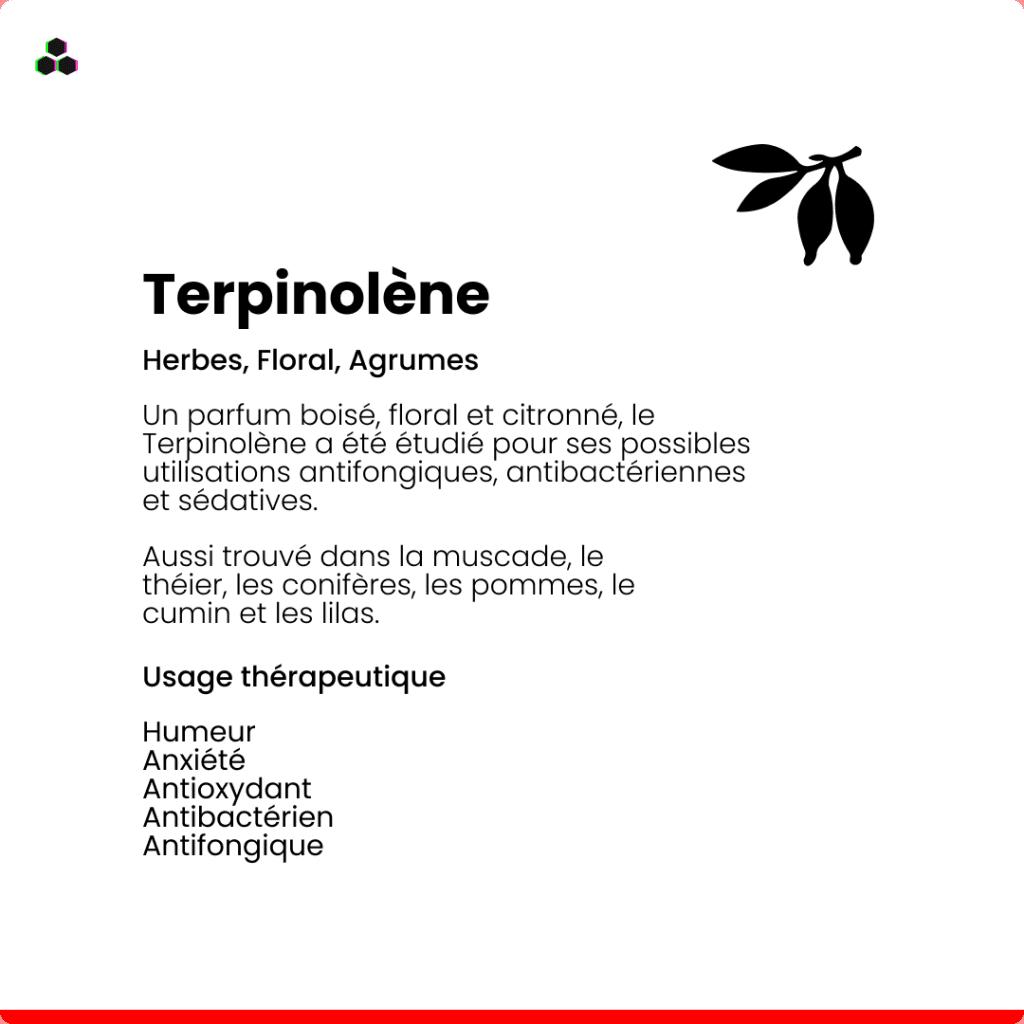 Le terpène du cannabis Terpinolène